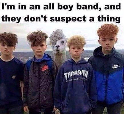Social group - I'm in an all boy band, and they don't suspect a thing THILASYER