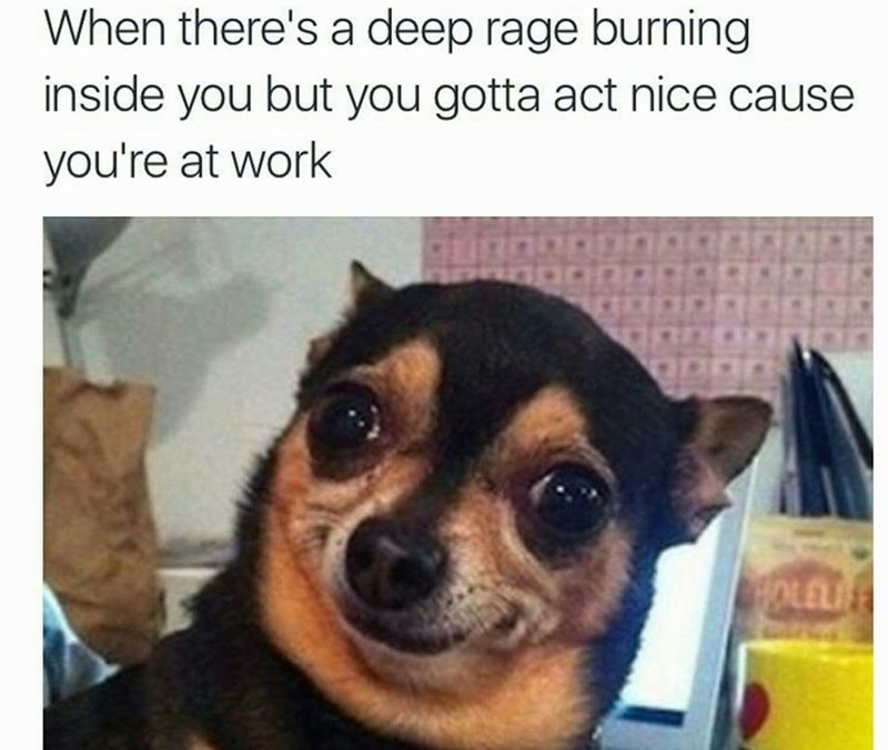 Dog - When there's a deep rage burning inside you but you gotta act nice cause you're at work OLELI