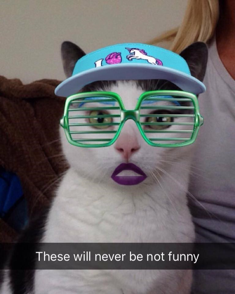 Cat - These will never be not funny