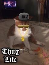 Photo caption - Thug Life