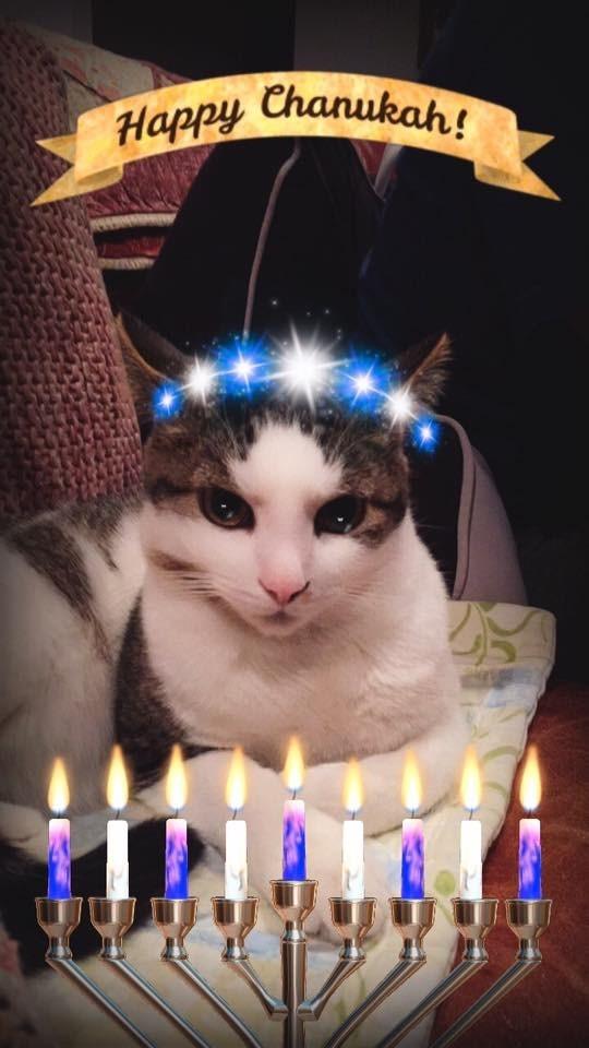 Cat - Happy Chanukah!