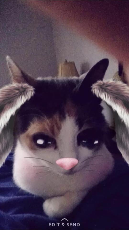 Cat - EDIT&SEND