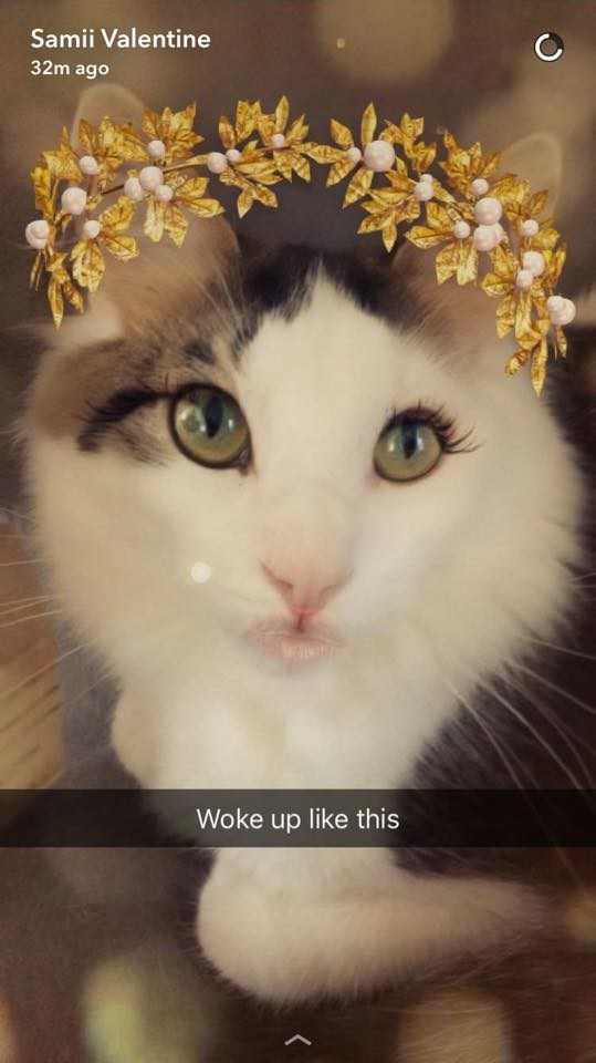 Cat - Samii Valentine 32m ago Woke up like this