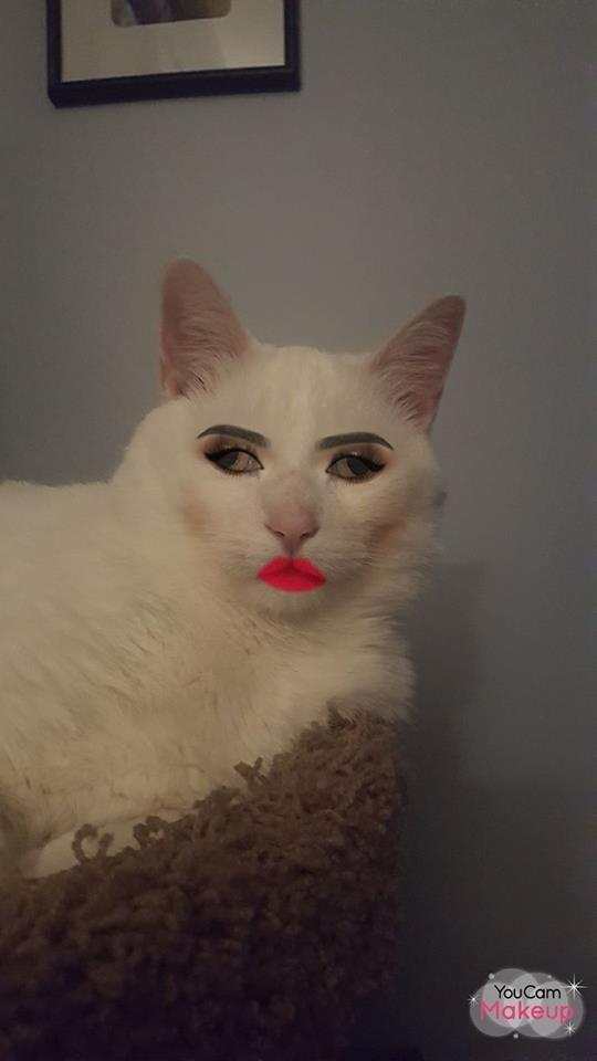 Cat - You Cam Makeup