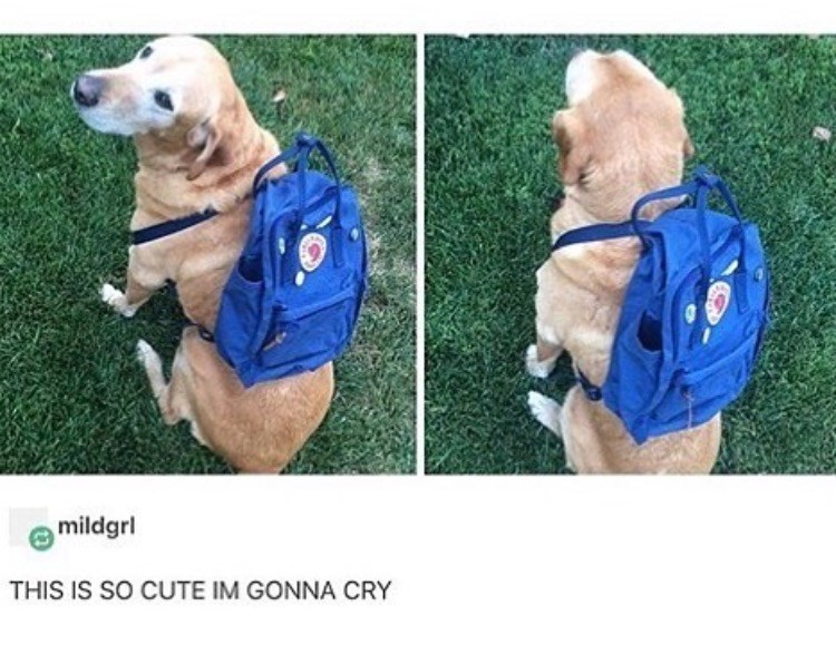 Dog - mildgrl THIS IS SO CUTE IM GONNA CRY