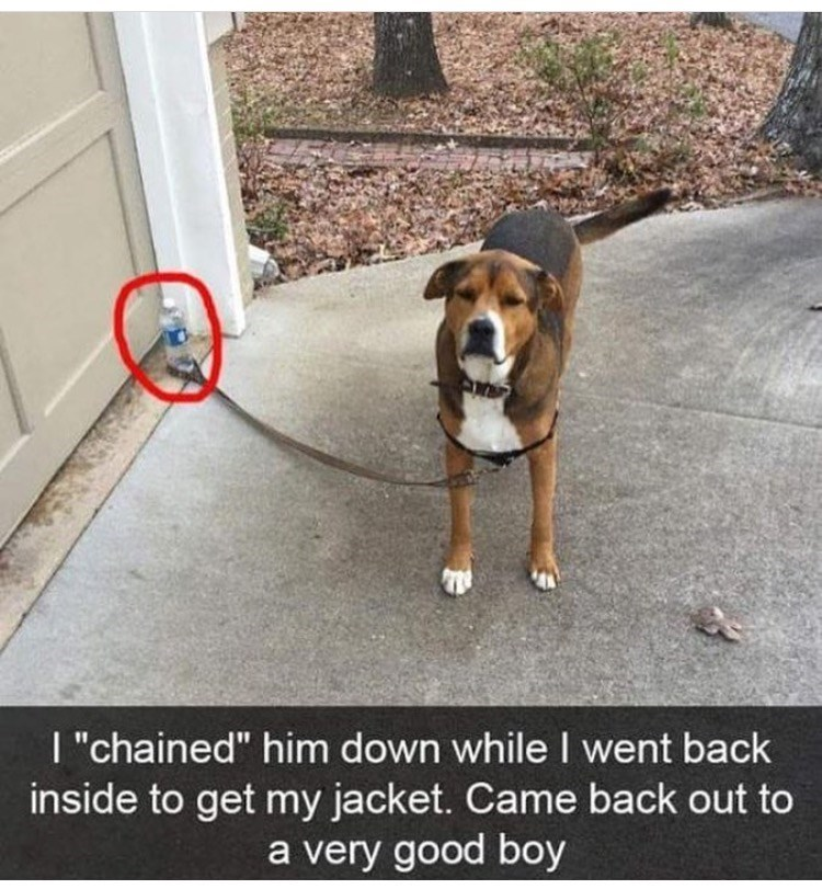 """Dog - I """"chained"""" him down while I went back inside to get my jacket. Came back out to a very good boy"""
