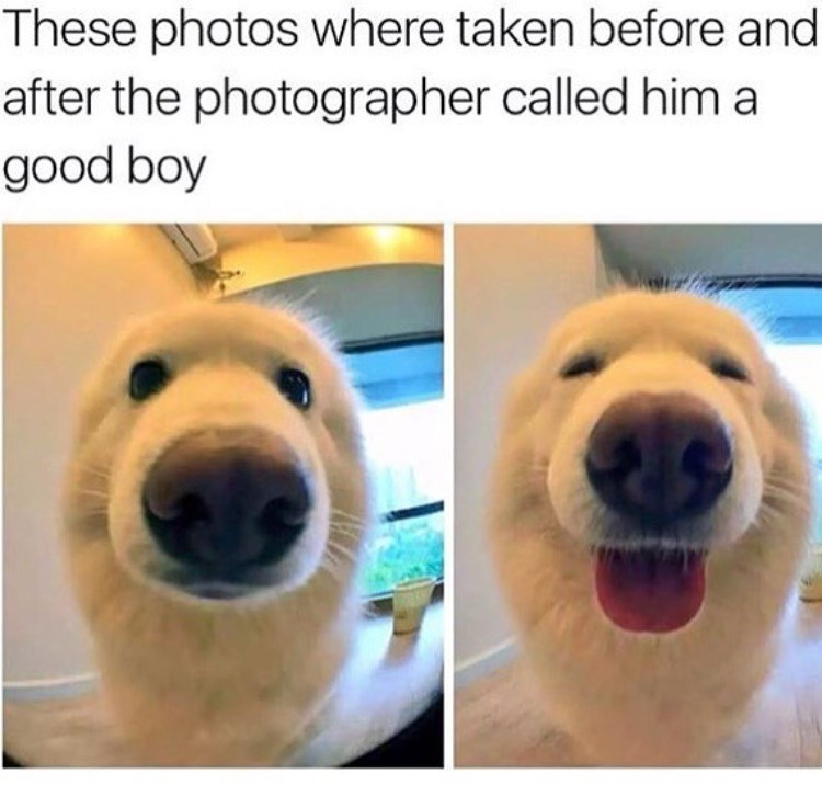 Dog - These photos where taken before and after the photographer called him a good boy