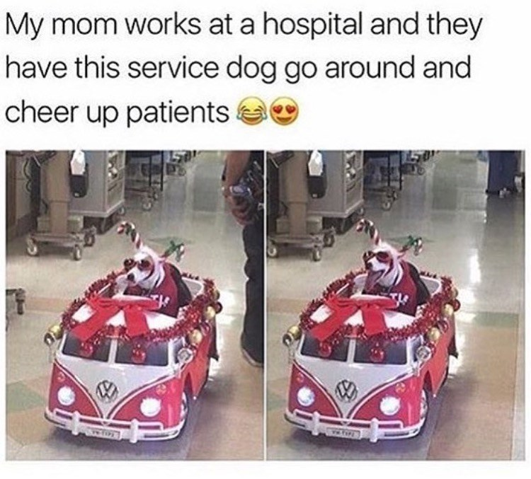 Motor vehicle - My mom works at a hospital and they have this service dog go around and cheer up patients ww.fo