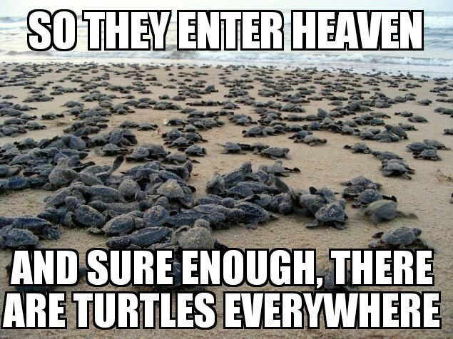 bad joke - Text - SOTHEY ENTER HEAVEN AND SURE ENOUGH, THERE ARE TURTLES EVERYWHERE