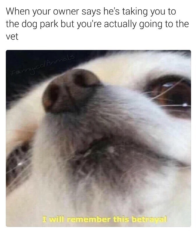 Friday meme of how a dog feels when he says he is taking you to the park but it appears you are going to the vet