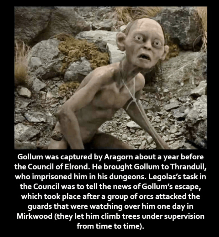 Human - Gollum was captured by Aragorn about a year before the Council of Elrond. He brought Gollum to Thranduil, who imprisoned him in his dungeons. Legolas's task in the Council was to tell the news of Gollum's escape, which took place after a group of orcs attacked the guards that were watching over him one day in Mirkwood (they let him climb trees under supervision from time to time).