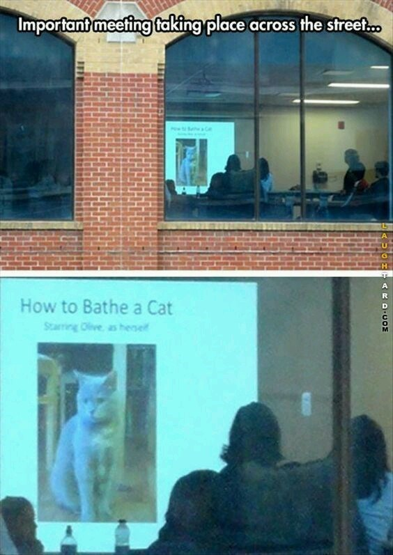 Adaptation - Important meeting taking place across the street.. How to Bathe a Cat Starring Olve as hese