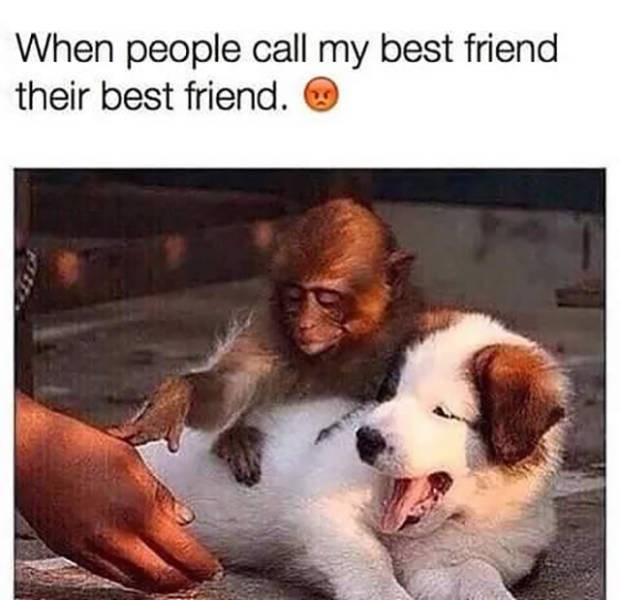 Canidae - When people call my best friend their best friend.