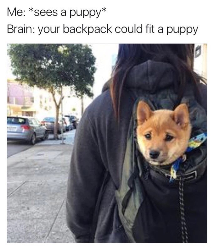 Dog - Me: *sees a puppy* Brain: your backpack could fit a puppy