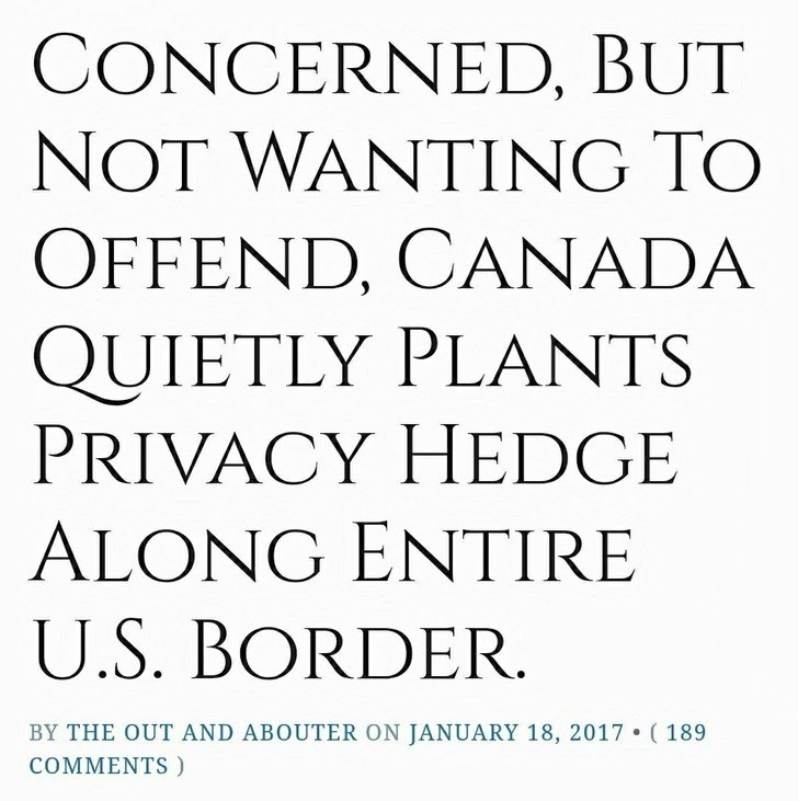 Font - CONCERNED, BUT NOT WANTING TO OFFEND, CANADA QUIETLY PLANTS PRIVACY HEDGE ALONG ENTIRE U.S. BORDER BY THE OUT AND ABOUTER ON JANUARY 18, 2017 (189 COMMENTS)