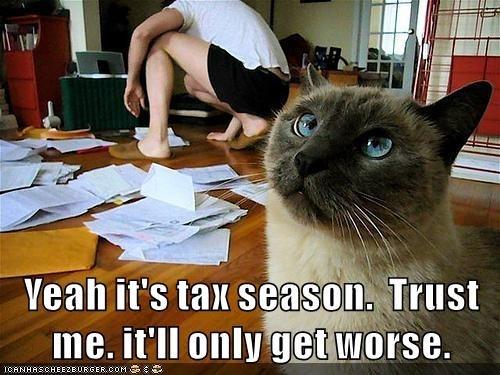 cat caption season tax - 9012623360