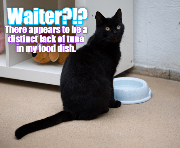 cat,caption,distinct,tuna,waiter,lack