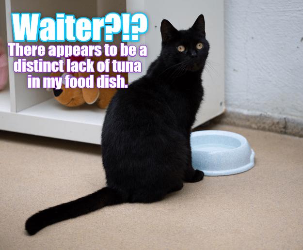 cat caption tuna waiter lack - 9012773120