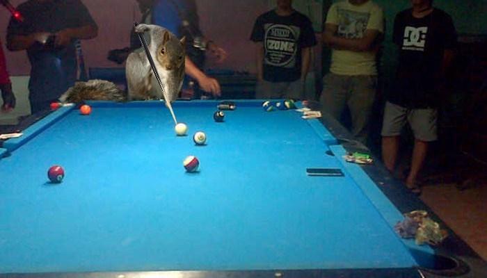 Billiard room - Z0NE