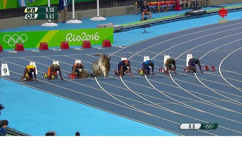 Sports - WR OR 9.58 9.63 Rio2o16 0.0