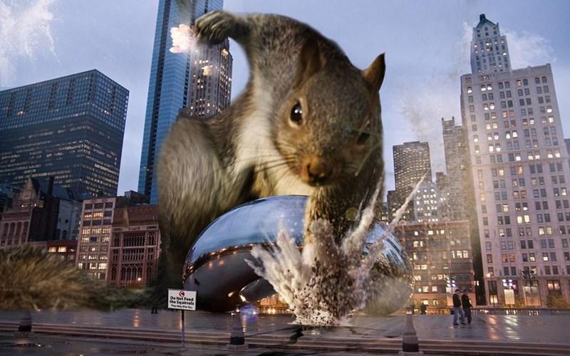 Squirrel - m m mI mm6