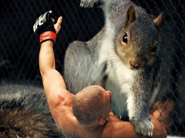 Squirrel - iada