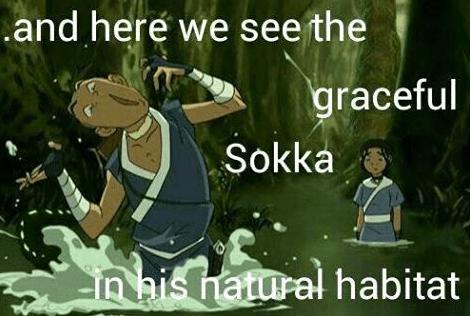 Cartoon - .and here we see the graceful Sokka n his hatural habitat