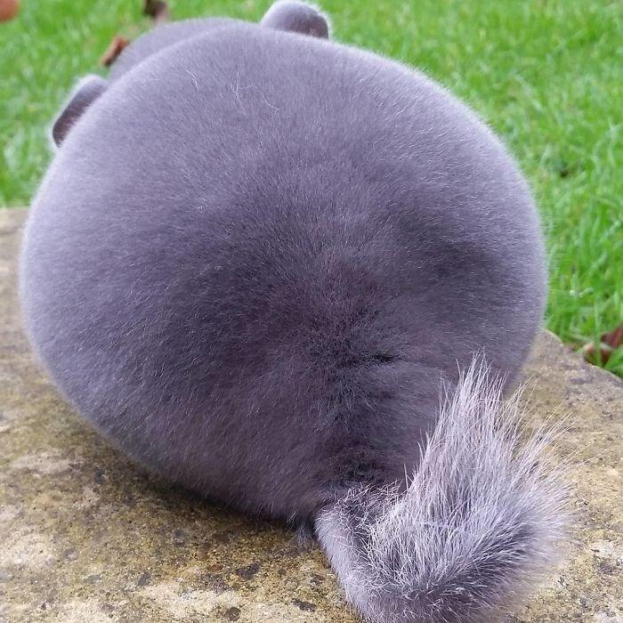 chinchillas - Fur