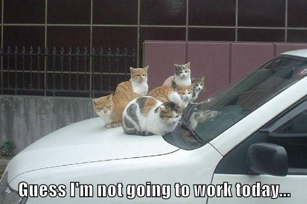 Funny cat picture of a bunch of cats on a car, captioned by the owner that he is not going to work today.
