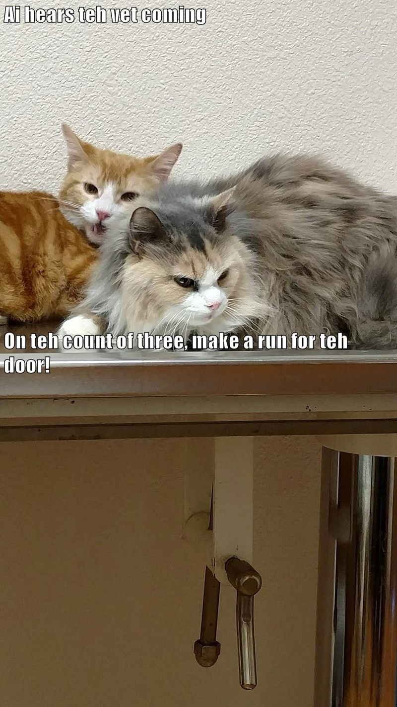 door,run,hear,vet,caption,Cats,coming