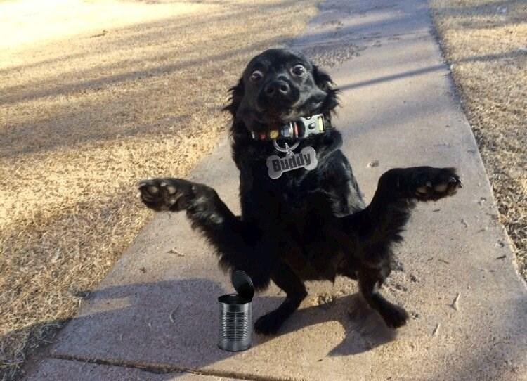Dog - Bundy