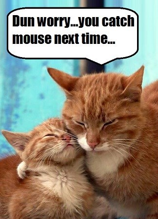 Cats caption catch next mouse time - 9013498624