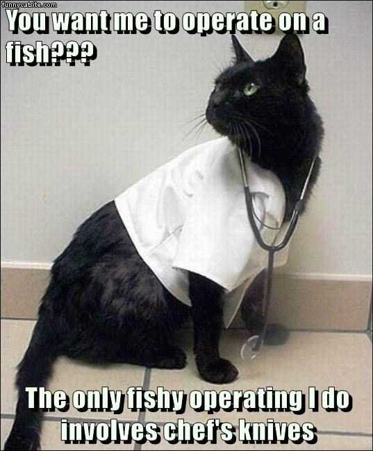 cat caption fish knives operate chef's - 9013501696
