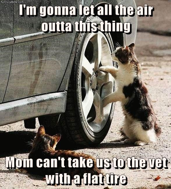 air Cats caption flat let vet tire out - 9013502720