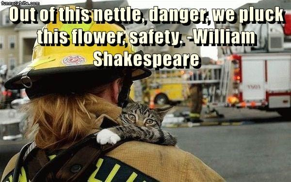 "Emotional meme of a cat being carried to safety by a fire fighter with a quote from Shakespeare in the caption: ""Out of this nettle, danger, we pluck this flower, safety. -William Shakespeare"""