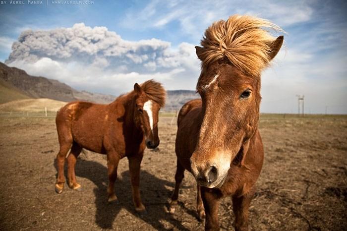 Horse - BY AUREL MANEA WAURELH COM