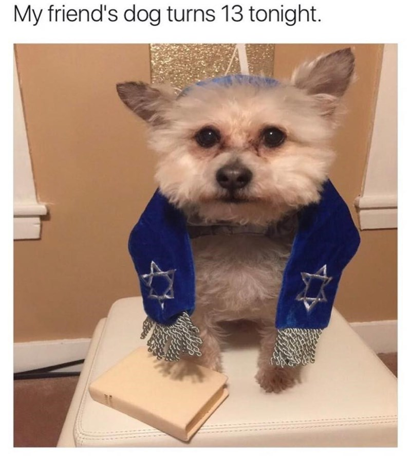 dogs,twitter,birthday,Bar Mitzvah,bark,jewish