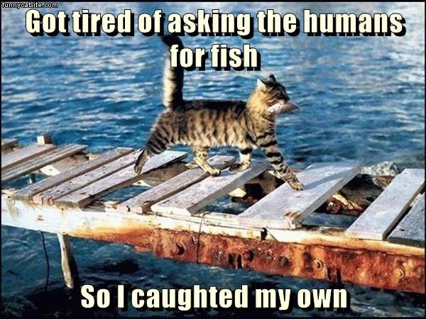 cat asking caption fish humans tired - 9013591296