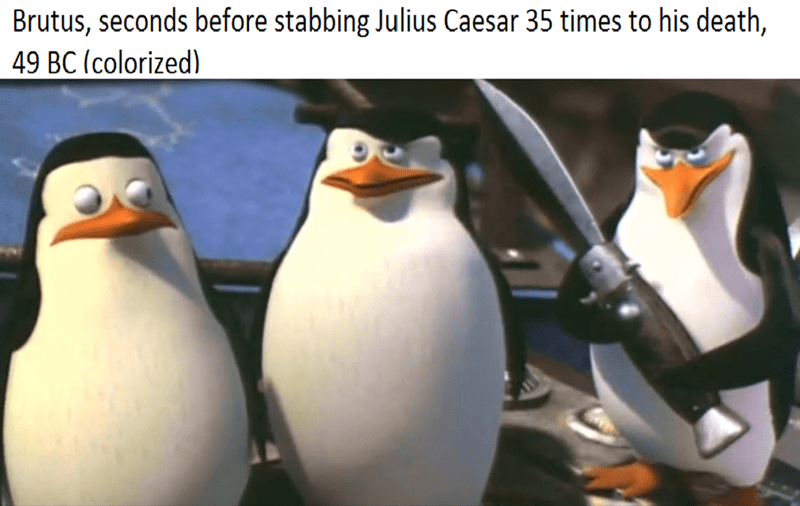 dank meme - Bird - Brutus, seconds before stabbing Julius Caesar 35 times to his death, 49 BC (colorized)
