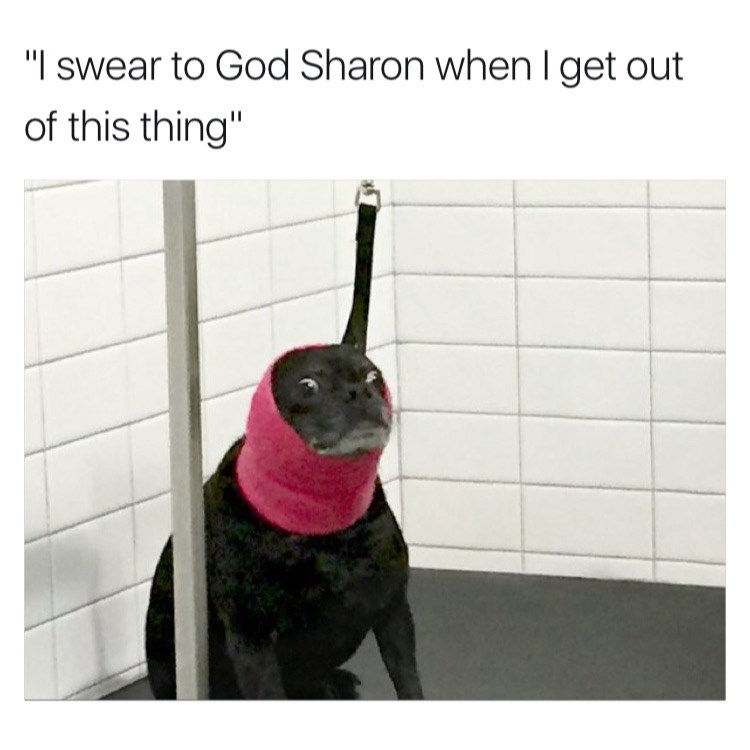 """Dog - """"I swear to God Sharon when I get out of this thing"""""""