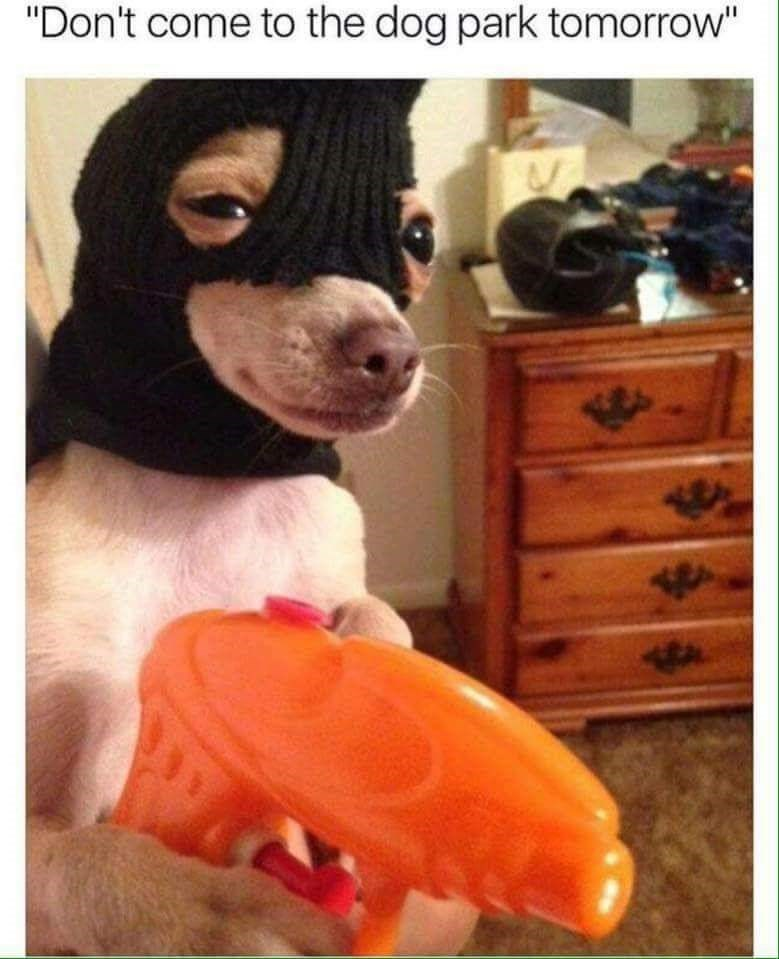 """Dog - """"Don't come to the dog park tomorrow"""""""
