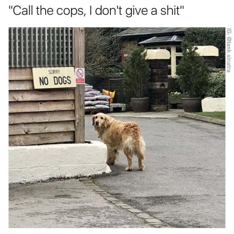 """Dog - """"Call the cops, I don't give a shit"""" SORRY NO DOGS IG: @tank.sinatra"""
