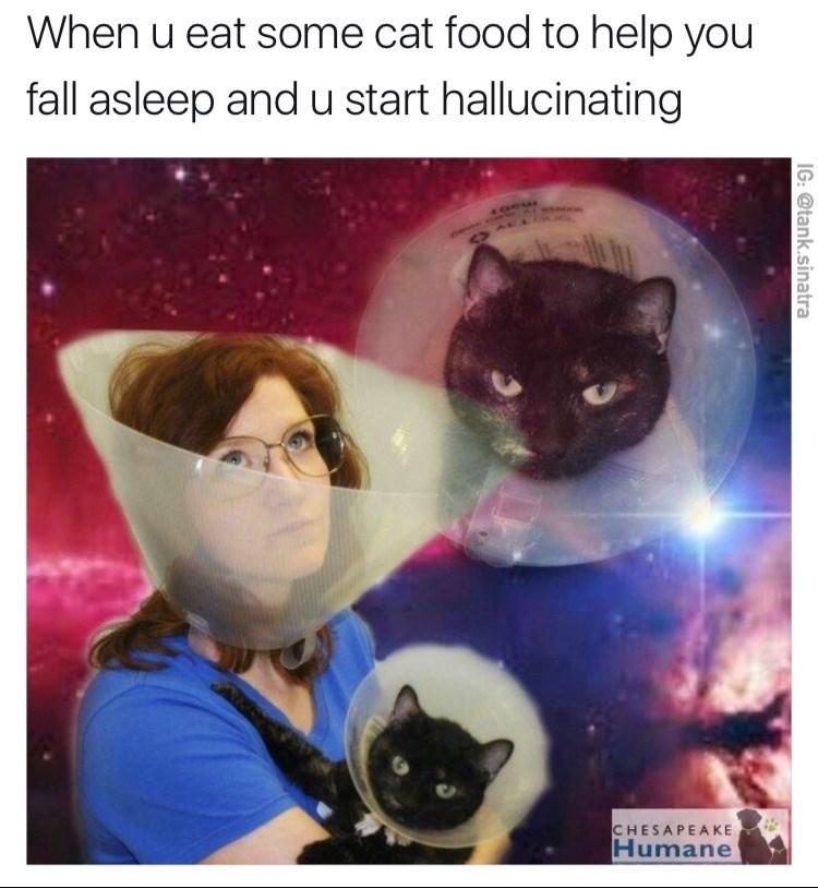 Cat - When u eat some cat food to help you fall asleep and u start hallucinating CHESAPEA KE Humane IG:@tank.sinatra