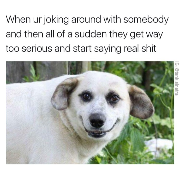 Dog breed - When ur joking around with somebody and then all of a sudden they get way too serious and start saying real shit IG: @tank.sinatra