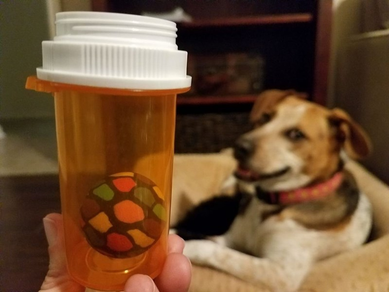 dog smug worth it look swallowed ball vet trip