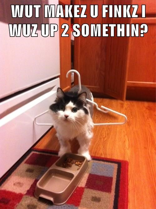 funny meme of a cat with a hanger that doesn't understand what is so funny.