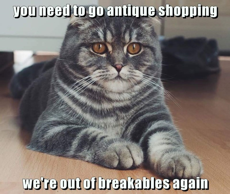 you need to go antique shopping we're out of breakables again