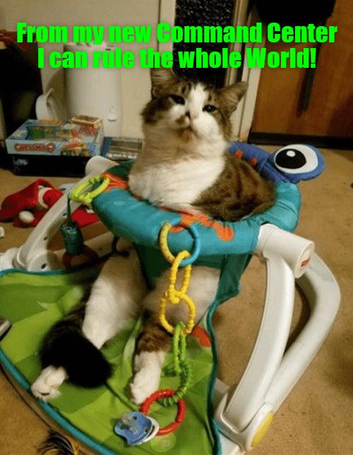 cat caption command center world rule - 9013875968