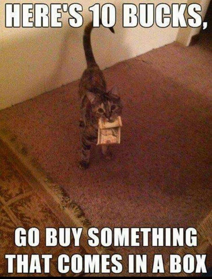 funny cat meme of giving 10 bucks for you to buy him something in a box so he can play with the box.