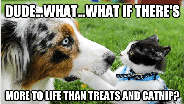 funny sudden realization cat and dog meme about catnip